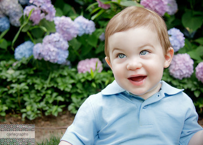 Colby in the Hydrangeas-