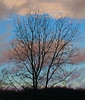 January 11.  The clouds broke and I took this shot through the tree..