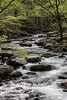 One of the other things I love about Spring in the Smokies - all the flowing water on the rocks.
