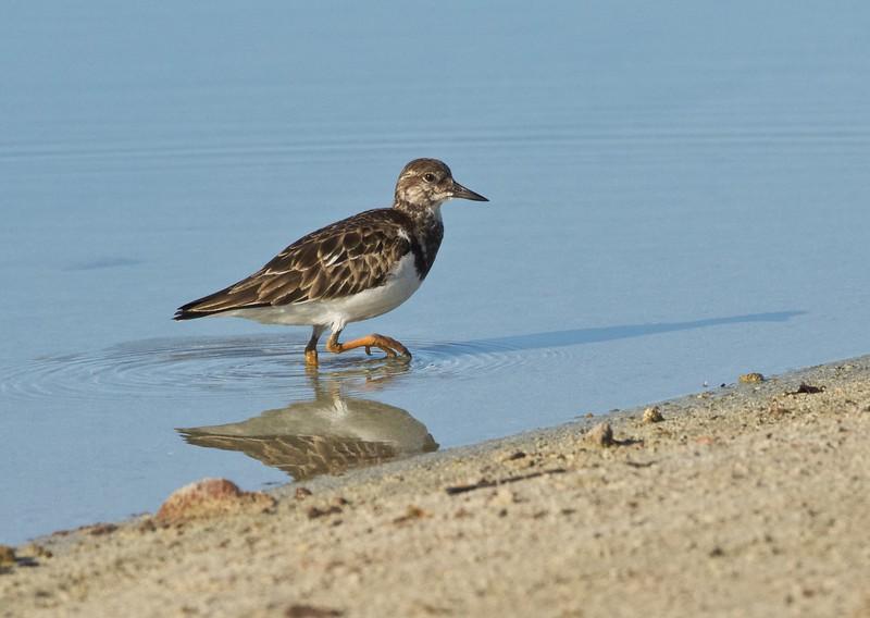 at Kawai'ele Sand Mine Bird Sanctuary