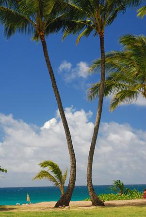 Kauai Topside 2012