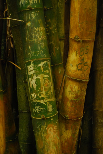 Bamboo grafitti