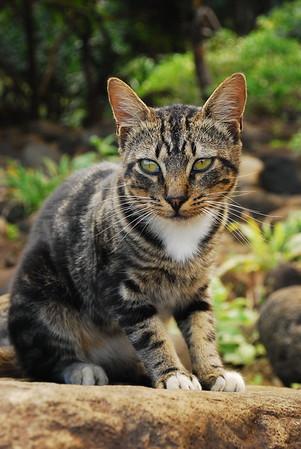 Kalalau kitty