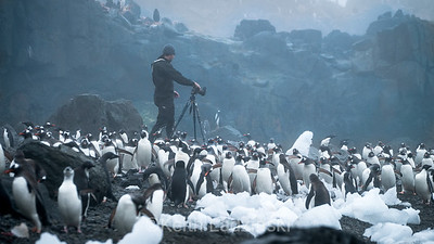 Wildlife and scenenry, Antarctica