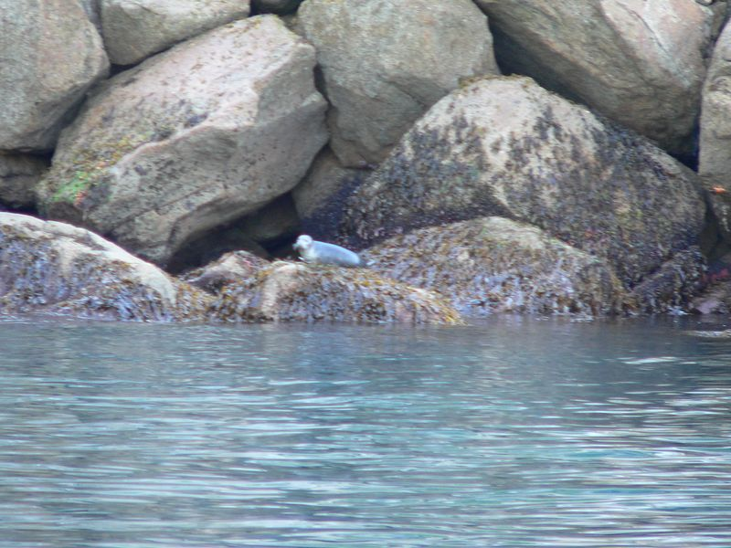 First Harbor Seal sighting