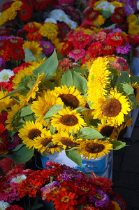 Captured Sunflowers