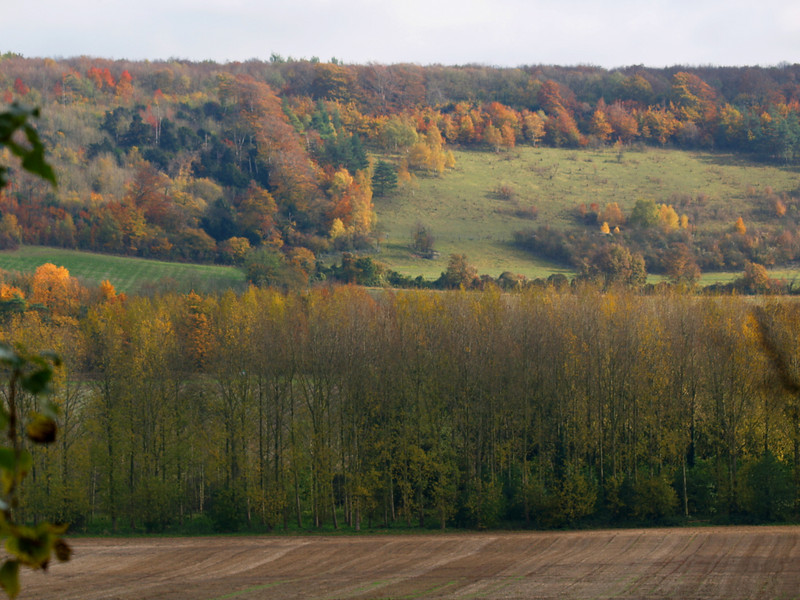 North Downs in NW Kent