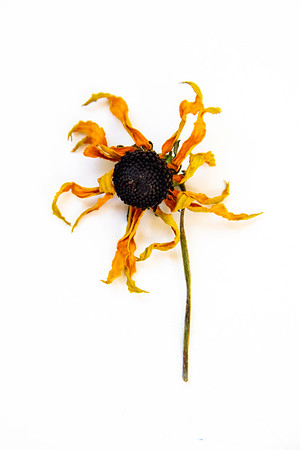 Dead Flower 1-6