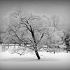 spooner tree (1) - Copy