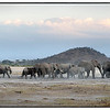 Elephants below Mt. Kilimanjaro, Amboseli National Park, Kenya.