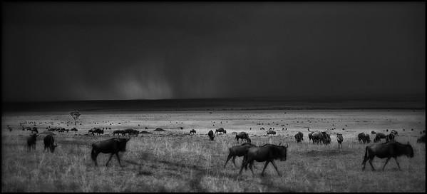 Rainstorm, Maasai Mara National Reserve, Kenya.