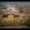 Elephant friends, Amboseli National Park, Kenya, as an oil painting.