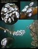 Visitor to Keystone, Pelagic barnacle arrived on Bull Kelp stipe. February 21, 2009