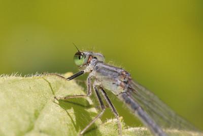 Kibale — Ant Course