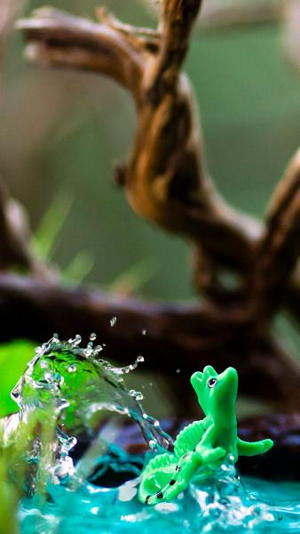 Kinder Basilisk Lizard 16x9