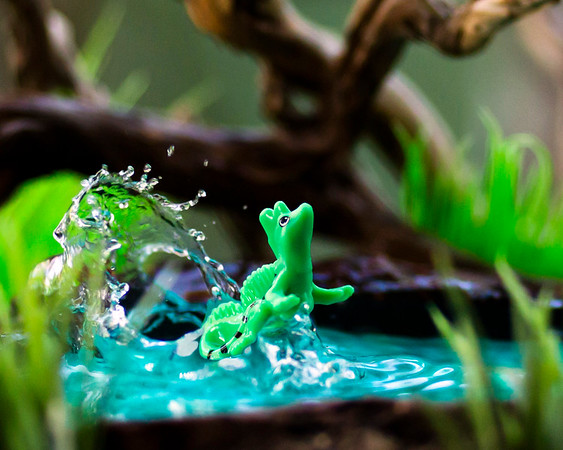 Kinder Basilisk Lizard 8x10 Horizontal