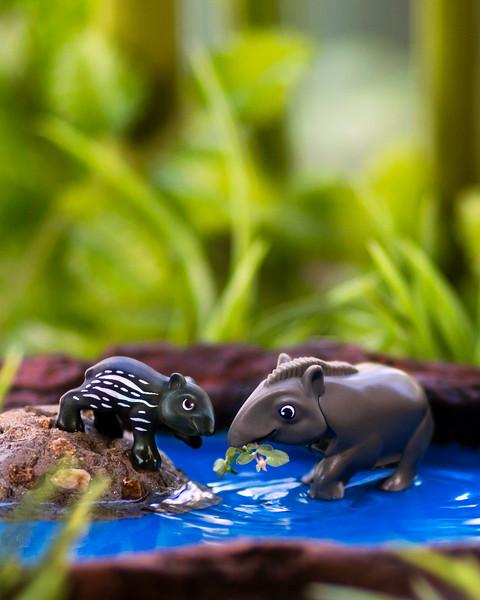 Kinder Tapir 8x10 Vertical