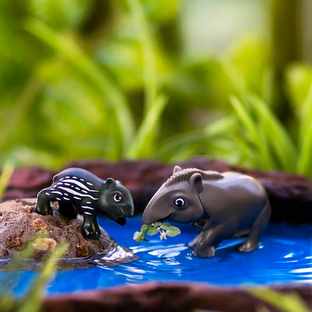 Kinder Tapir 1x1