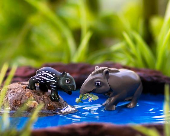 Kinder Tapir 8x10 Horizontal