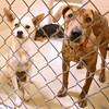 There are loads of dogs and cats available for adoption needing a forever home at the Kingsport Animal Shelter. The shelter is holding an adopt-a-thon this weekend, Saturday from 12:30p.m.-5p.m. and Sunday 12:30p.m.-4p.m. They will waive the adoption fee. Photo by Erica Yoon