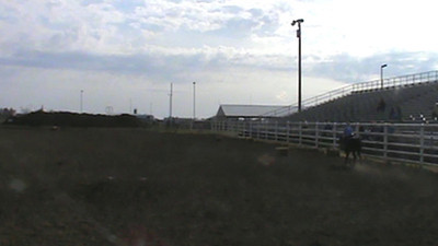 Hurdles Buckwheat