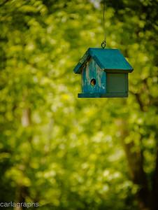 birdhouse-1173