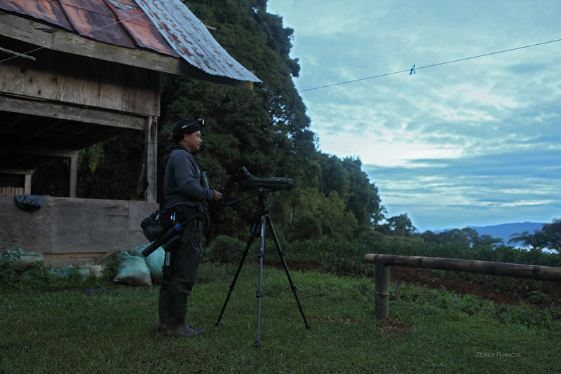Early morning, Nicky is set up to record the Bukidnon Woodcock.