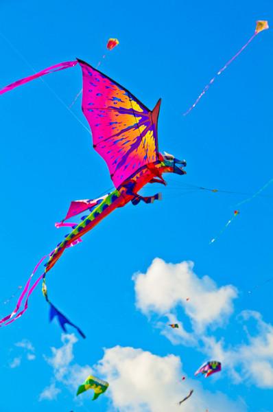 kites 02-20-11