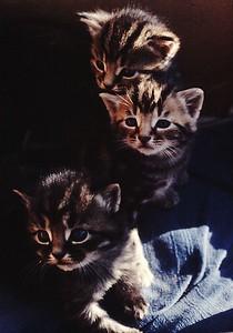 three kittens in boxy