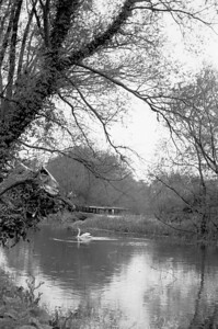 Swan and River (b+w f25)