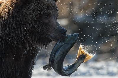 Salmon Dance