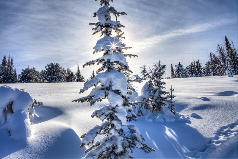 Winter Sunburst