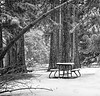 Waiting for Spring (Yosemite Valley)<br /> © Kreitz Creative Images, Palo Alto, CA