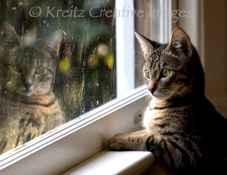 Reflecting on Hobbes<br /> © Kreitz Creative Images, Palo Alto, CA