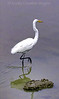 Crane at Baylands Park<br /> © Kreitz Creative Images, Palo Alto, CA