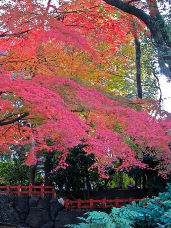 Kyoto December 7, 2013