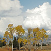 ASPENS, BLACKTAIL PLATEAU DRIVE, YELLOWSTONE N.P.