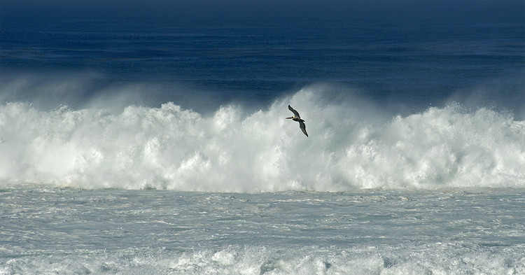 BIG SURF, LA JOLLA, CALIFORNIA
