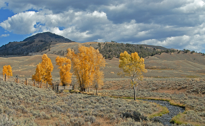 LAMAR VALLEY, YELLOWSTONE N.P.,WYOMING