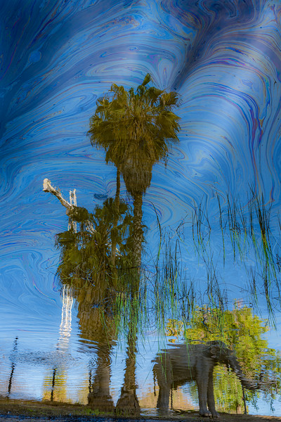 I wasn't that inspired by the place when I got there, but started taking photos of reflections and oil slicks.