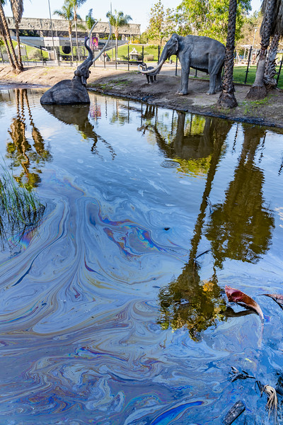 This is a pretty uninspired shot of the La Brea Tar Pits in Los Angeles.  I was always fascinated by the Tar Pits as a kid when I learned about them in school. If you don't know, the Tar Pits are where oil and methane have oozed up from the earth for tens of thousands of years. The oil is in the form of asphalt and it created slicks where over millennia, animals have got stuck in the muck, died and became fossils.  Thousands of fossils have been excavated including many of the giant mammals that roamed North America such as Mammoths, Saber Toothed Tigers, Dire Wolves, Bears, and Giant Sloths.  Anyway, I had always wanted to check it out, and finally did when I was in LA for a few days – this is right in the heart of LA.  This photo shows some models of mammoths in a reenactment of one of them getting trapped in the Tar Pit with another trying to help and a little one watching.  It's evocative, but wasn't very interesting for me to photograph.  <br /> But, I did notice that the oil slicks created cool iridescent patterns on top of the water.