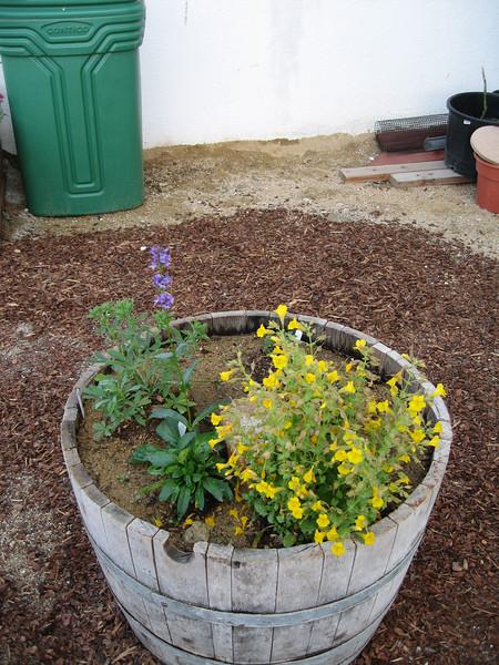 4/30/07 Oak barrel w/ California native wildflowers in Arleen's cottage/herb garden.
