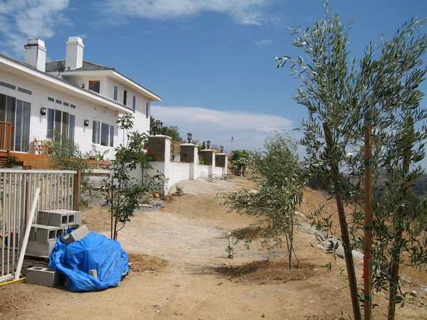 8/25/07 Rear elevation (Olive Trees)