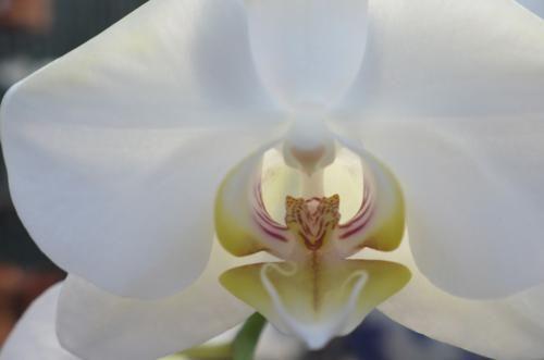 LCP, Floral, 0455
