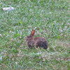 06/03/11 Bunny!