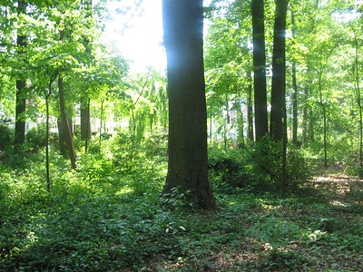 Lacey Woods
