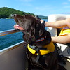 Yogi, enjoying the breeze as the boat was heading across the lake