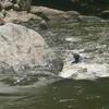 Along the Horsepasture River