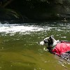 Mica enjoys the water as much as the humans!