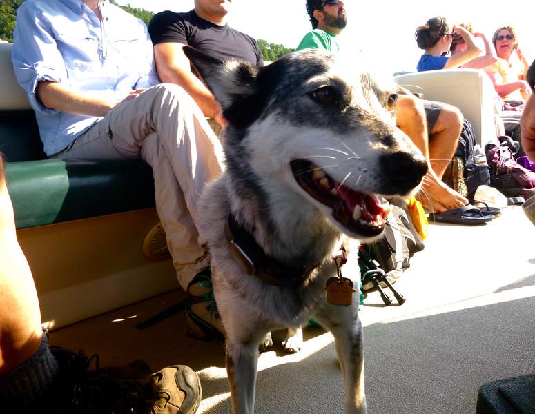 Mica, chief mascot of Jocassee Lake Tours!!